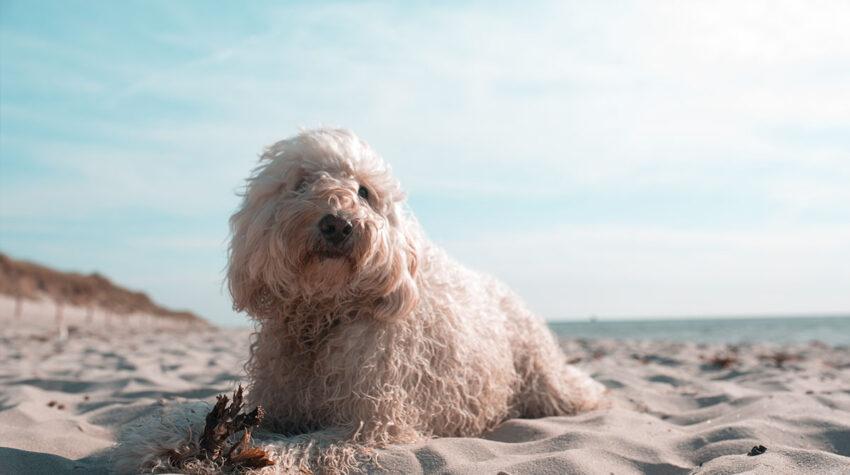 Sonnige Aussichten für Maxi und ihre Freunde: Am Strand von Ahrenshoop heißt es wieder Leinen los!