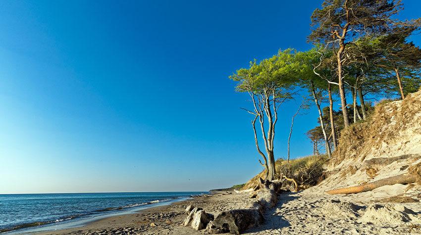 Wald und Meer wechseln sich auf Fischland-Darß-Zingst ab. © Shutterstock, FotoHamBorg - Borg Enders