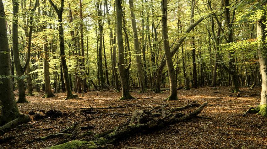 Unglaublich vielfältig: Auf Fischland-Darß-Zingst liegen Wald und Meer direkt nebeneinander. © Shutterstock, bluecrayola