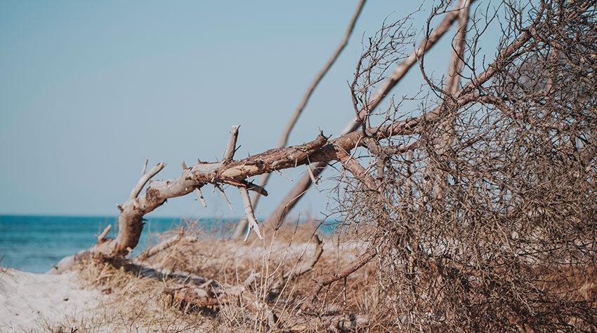 Am Weststrand könnt ihr die sogenannten Windflüchter entdecken.
