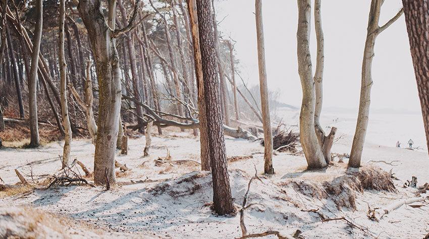 Mystisch: Im urigen Darßwald herrscht eine ganz besondere Atmosphäre.