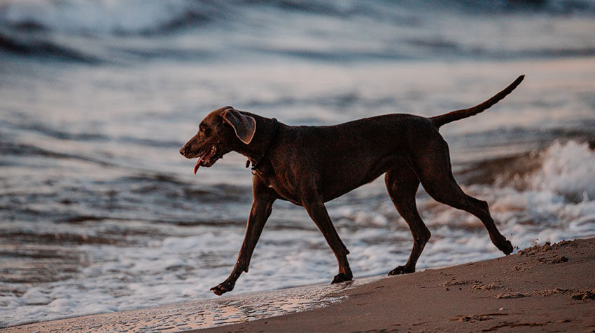 Im Ostseeurlaub kann sich euer Hund so richtig schön austoben.